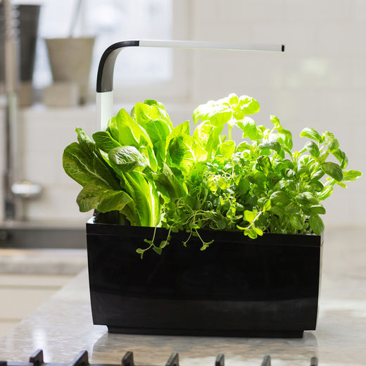 T6 Kitchen Garden - black